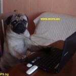 мопс пише в скайп