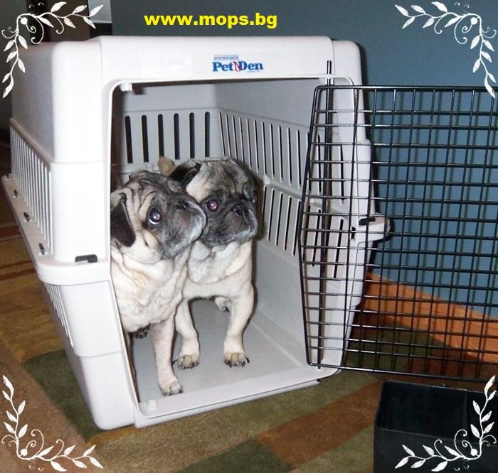клетка за пътуване на куче