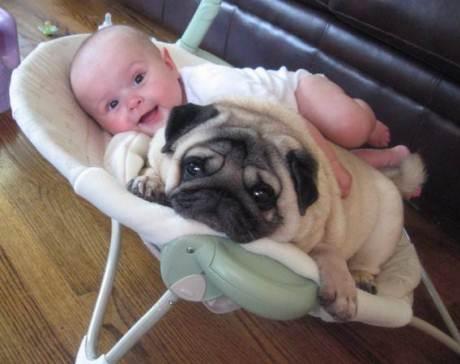 мопс и бебе съжителство