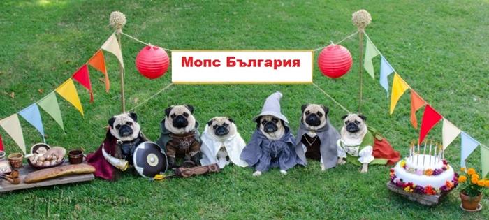 Празнувай с Мопс България