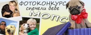 Фотоконкурс 2013г. с награда бебе Мопс