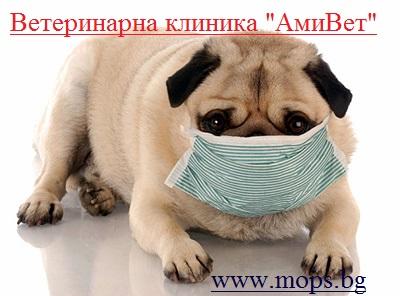 Ветеринарна клиника за Мопс
