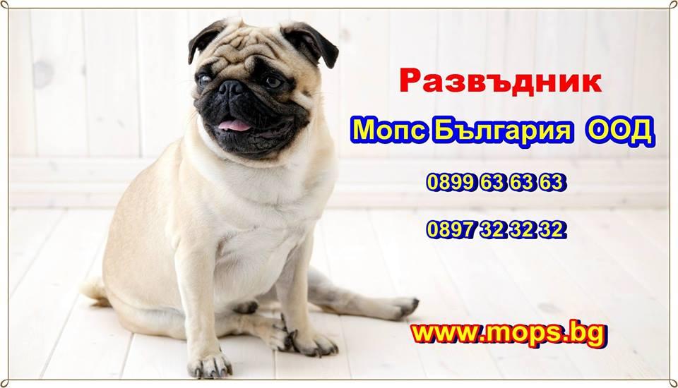 кученца порода Мопс