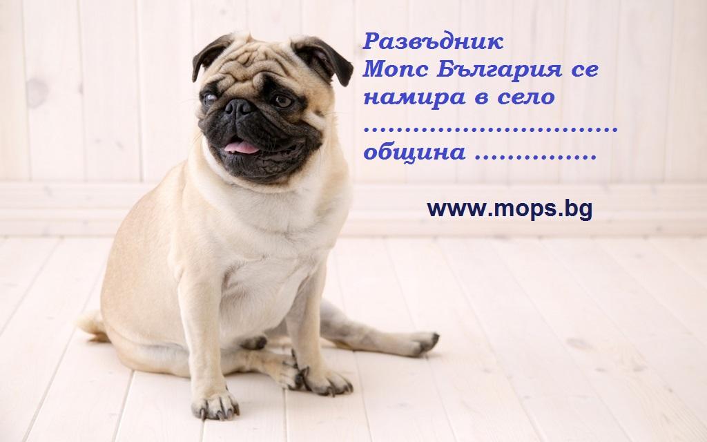 Спечелете чистокръвно бебе Мопс от Мопс България