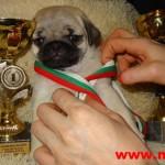 Бебета Мопс родени в Мопс България