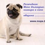 Подарък бебе Мопс 2015г. от Мопс България
