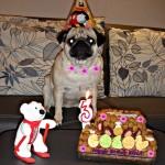 Мопсчето Бела от Мопс България празнува рождения си ден става на 3 годинки ! Нека бъде живо и здраво,както и неговите грижовни стопани! www.mops.bg